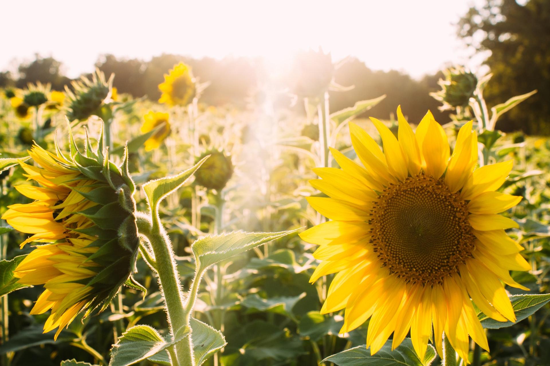 elijah-hail-happy flowers-unsplash